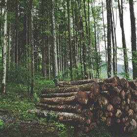 Florestais
